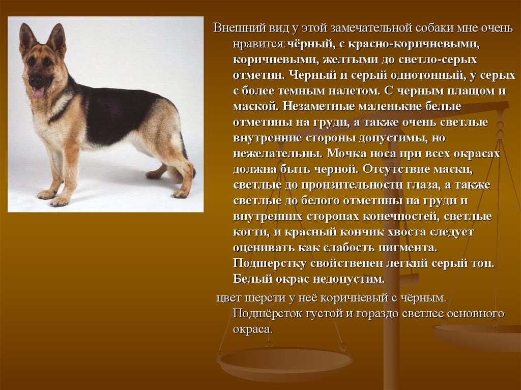 сочинение о знакомом животном