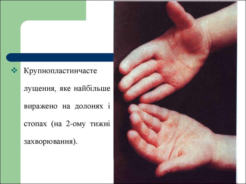 pdf constructores de