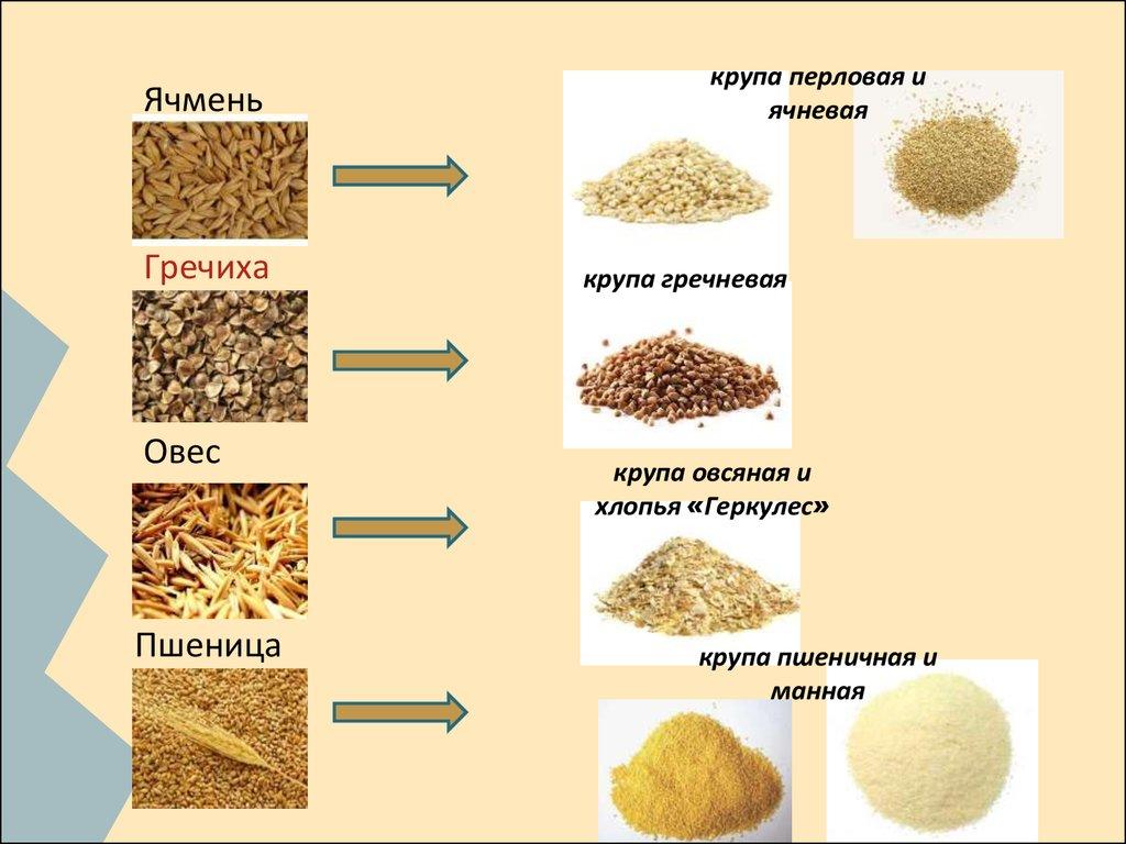 Как приготовить пирожное картошка из печенья с вареной сгущенкой
