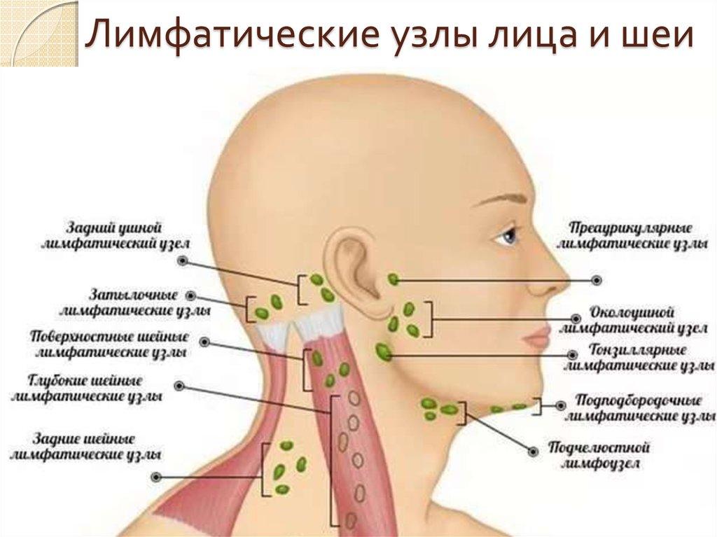 Почему на шее увеличены лимфоузлы