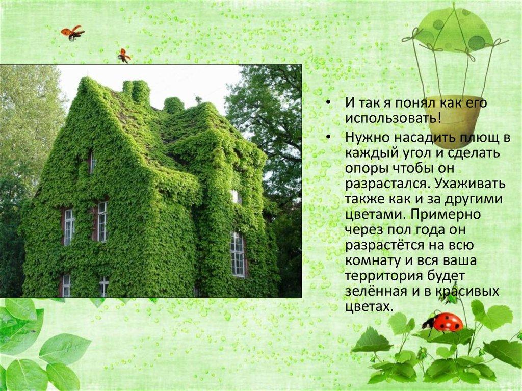 6 класс растения в интерьере жилого дома