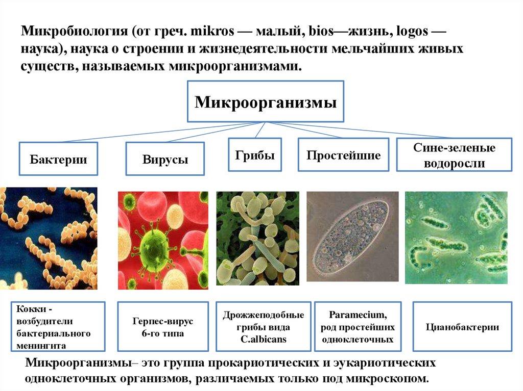 Паразиты и очищение организма