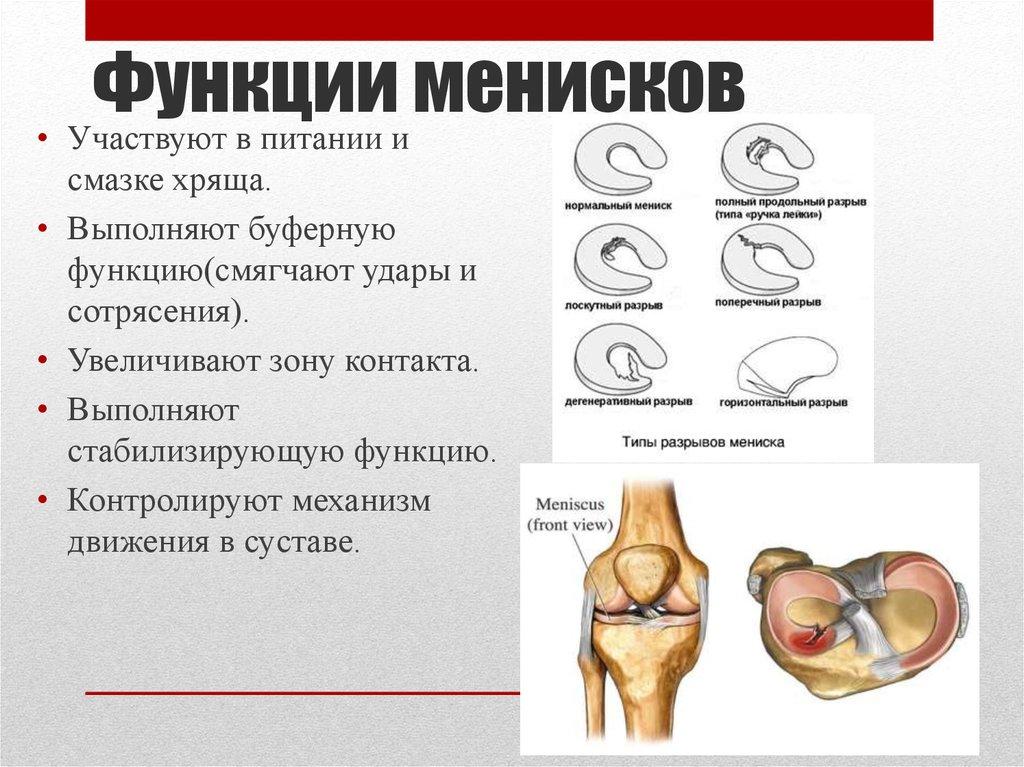 Мениски коленного сустава симптомы лечение в домашних условиях 551