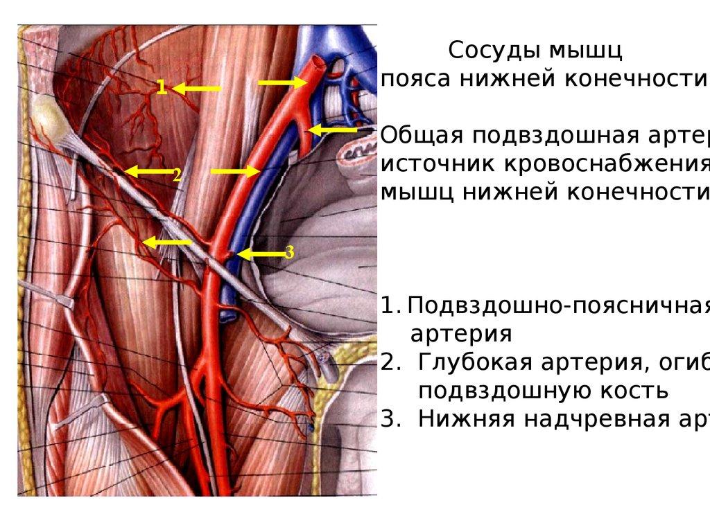 Температура при тромбозе глубоких вен