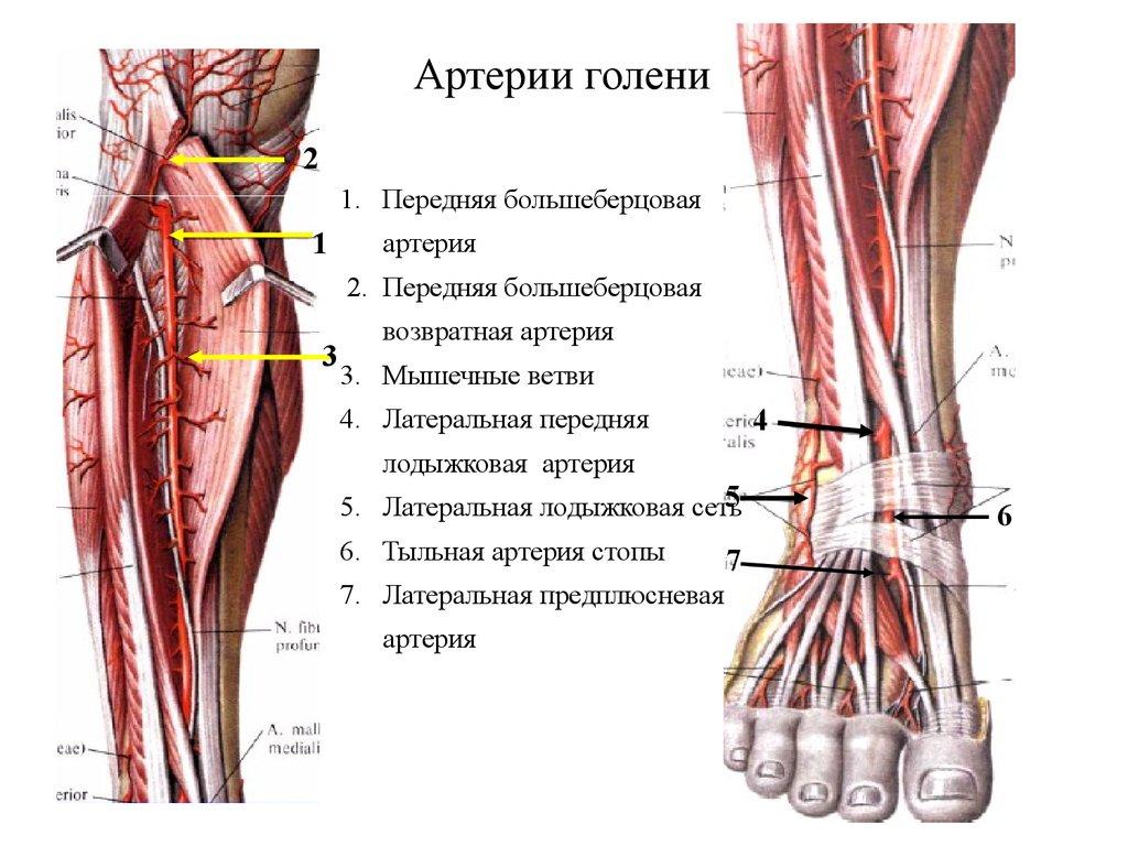 замена артерии нижней конечности