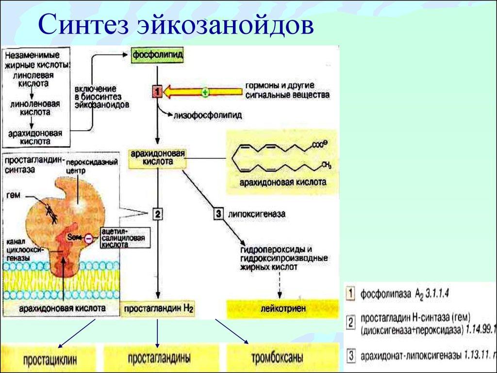 концентрация статинов