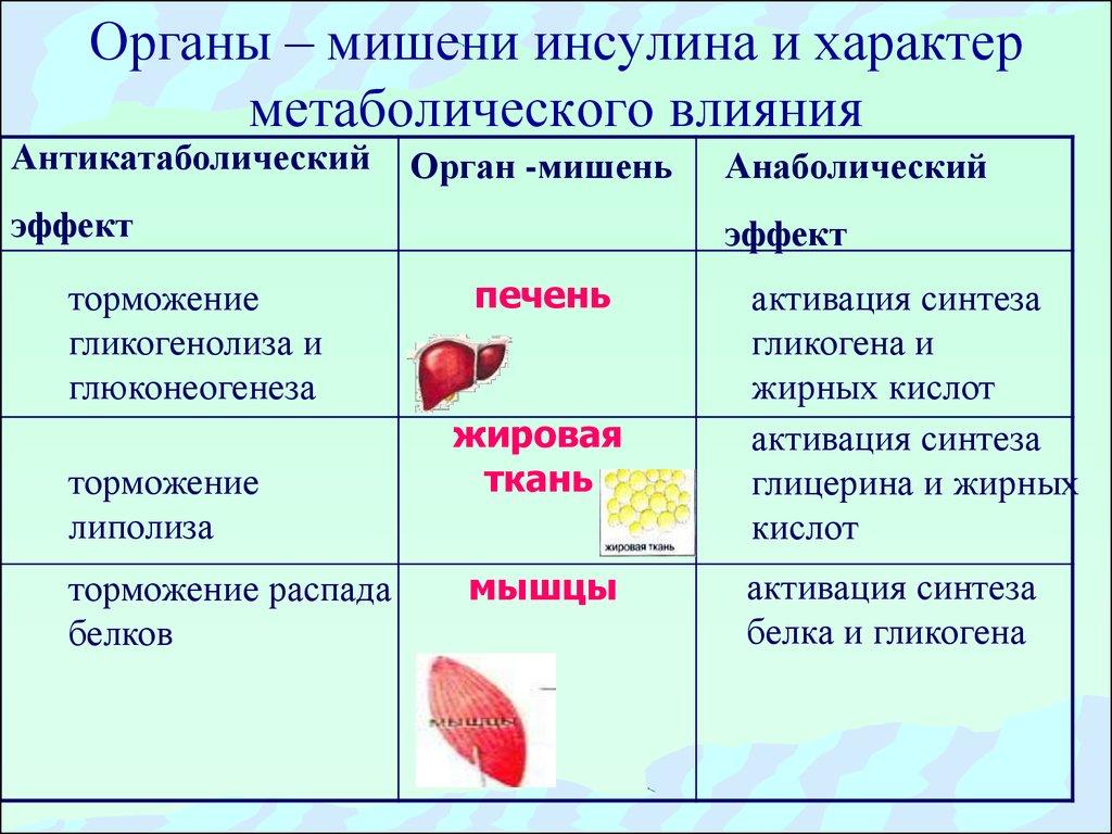 Организмы плевропневмониеподобные
