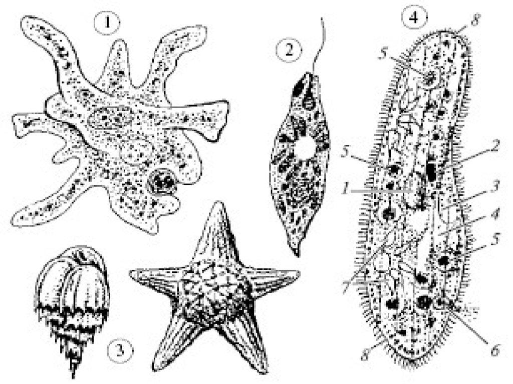 к типу членистоногие относят животных