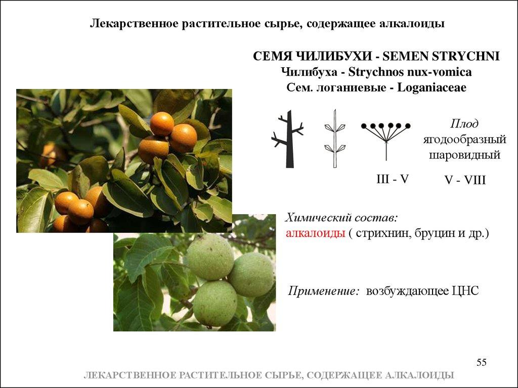 gotovie-domashnie-zadaniya-2-klass-po-russkomu-yaziku-perspektiva