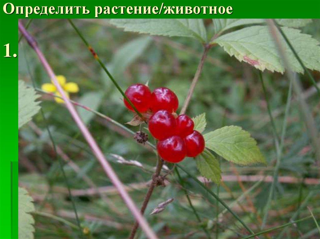 атласопределитель растений  advODKAcom