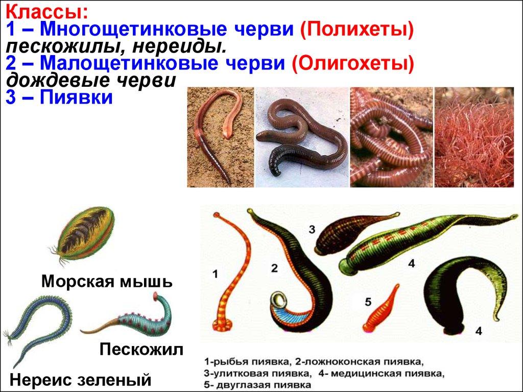 какие организмы являются паразитами