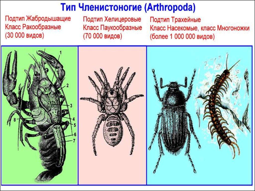 паразиты в теле человека как лечить
