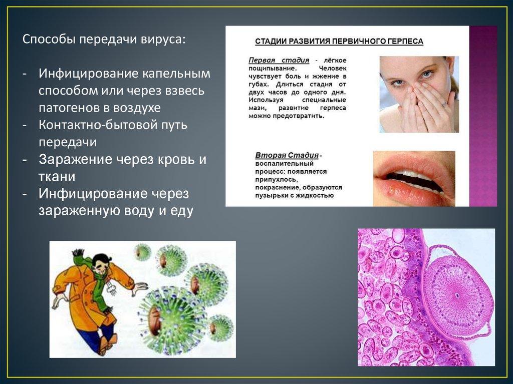 вирусы виды вирусов реферат