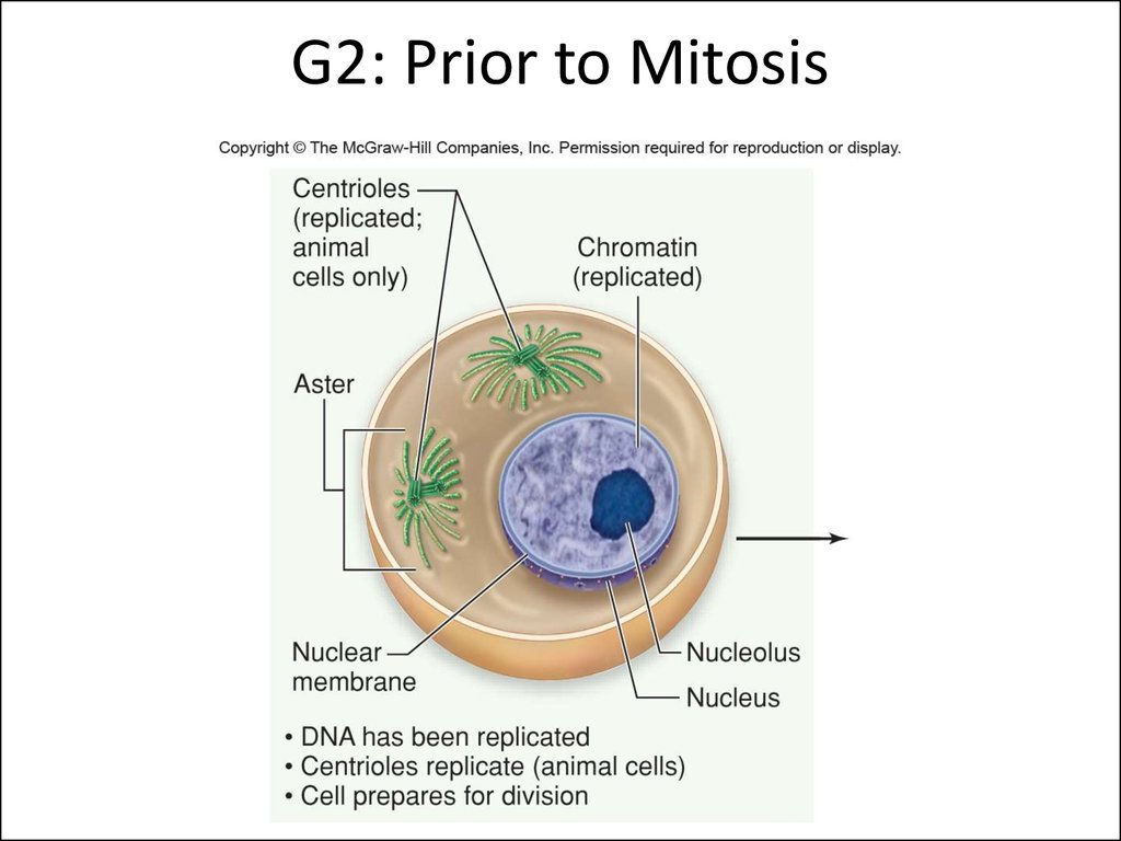 cell biology evolution of the Mutations and evolution, photosynthesis, genetics, genetics-gottshall, pedigrees, cell membrane and transport gottshall, intro to biology gottshall, macromolecules gottshall, cells, meiosis, cell cycle--gottshall, mitosis and the cell cycle, dna gott.