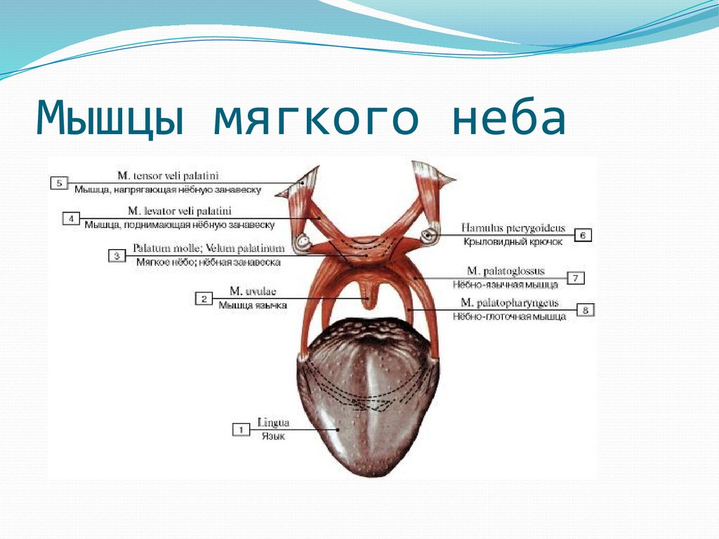 гипоаллергенный быт при аллергии