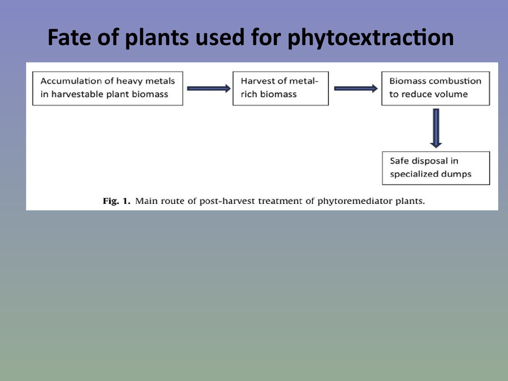 Fate of plants used for phytoextraction
