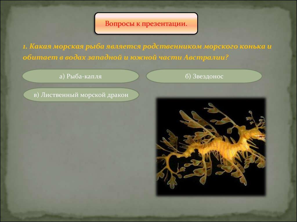 лиственный морской дракон презентация