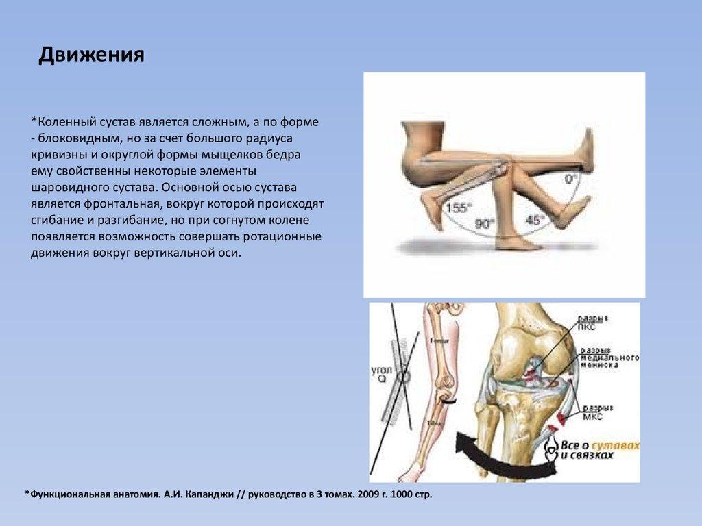 связки коленного сустава википедия