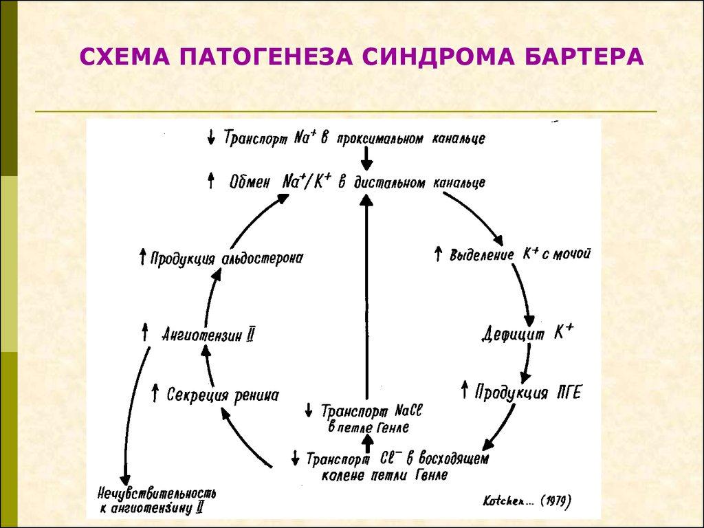 патогенез схема отека нефротического синдрома