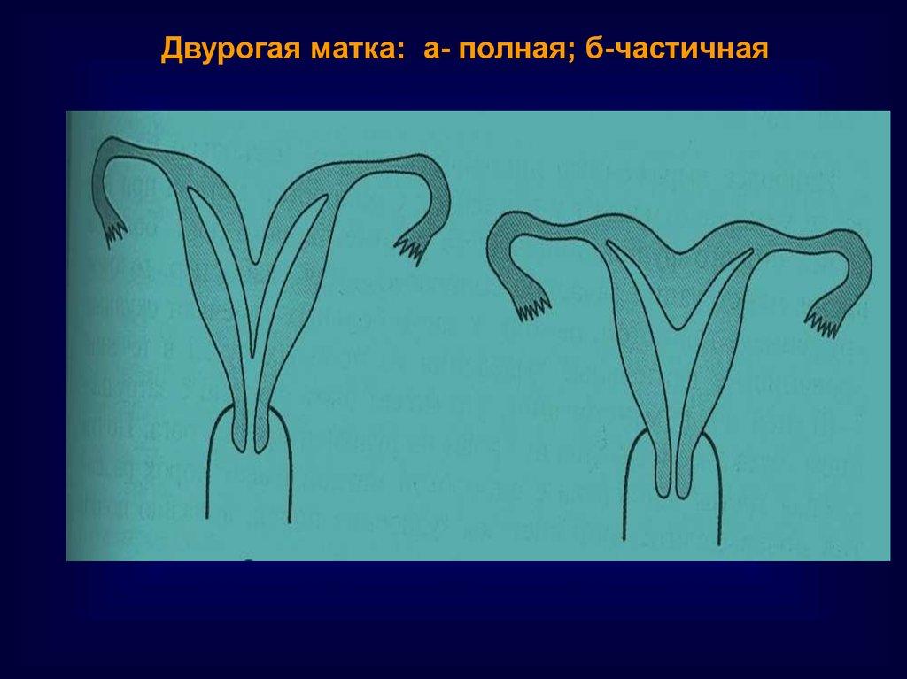 подготовка эндометрия к эко