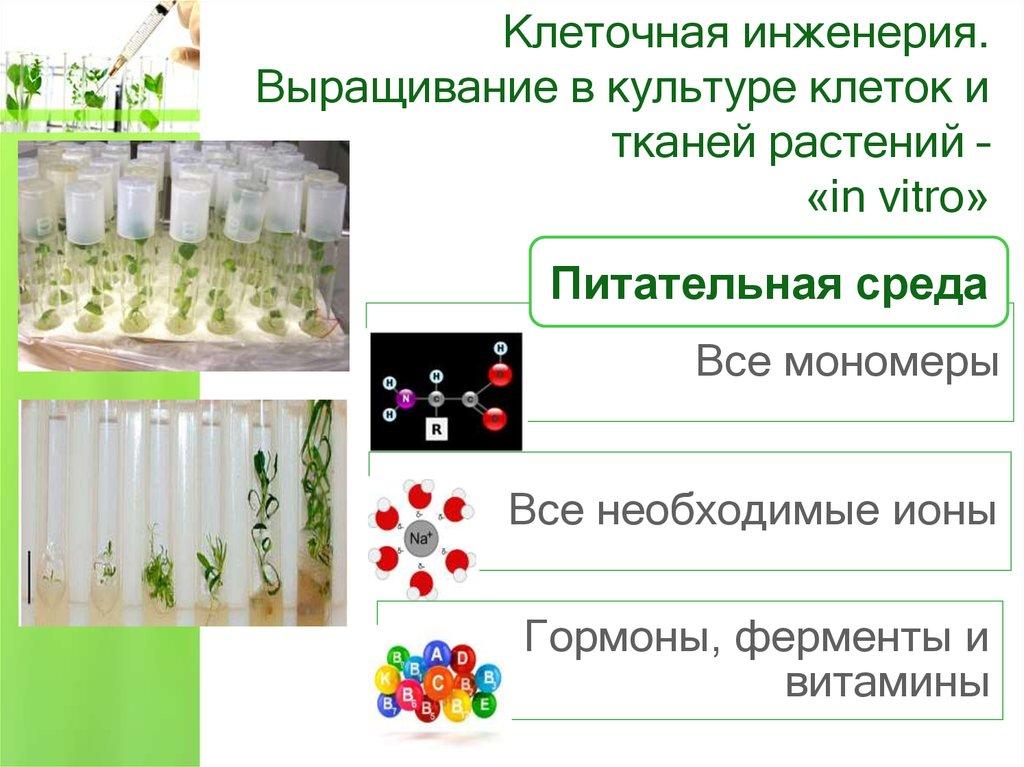 Выращивание тканей вне организма метод 84