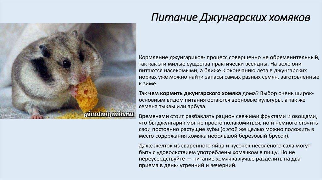 Как хранении мед в домашних условиях 880