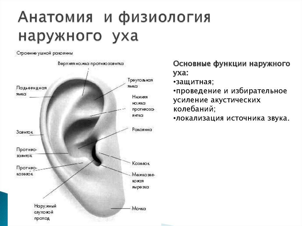 Болит козелок уха у ребенка