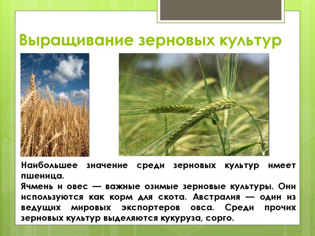 Пример бизнес плана выращивание зерновых культур 98