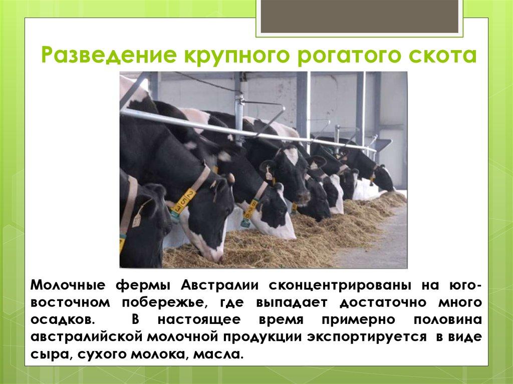 Бизнес план выращивание крупнорогатого скота 12
