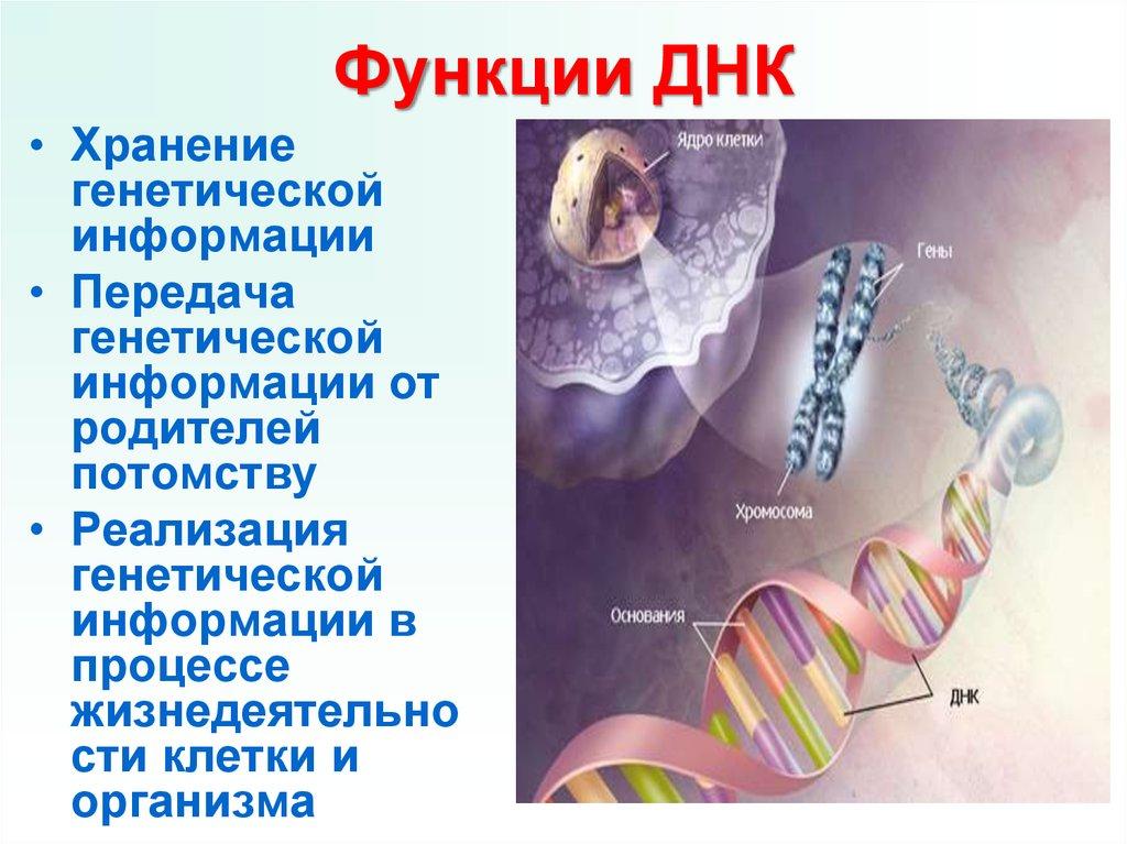 Кодирование генетической информации