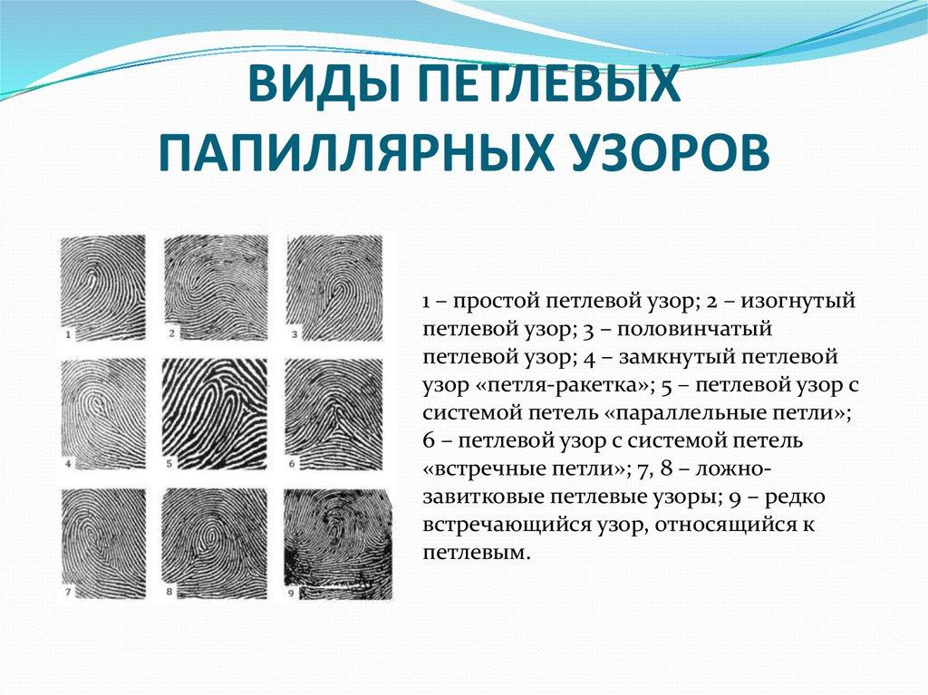 Типы папиллярных узоров пальцев рук картинки вируса