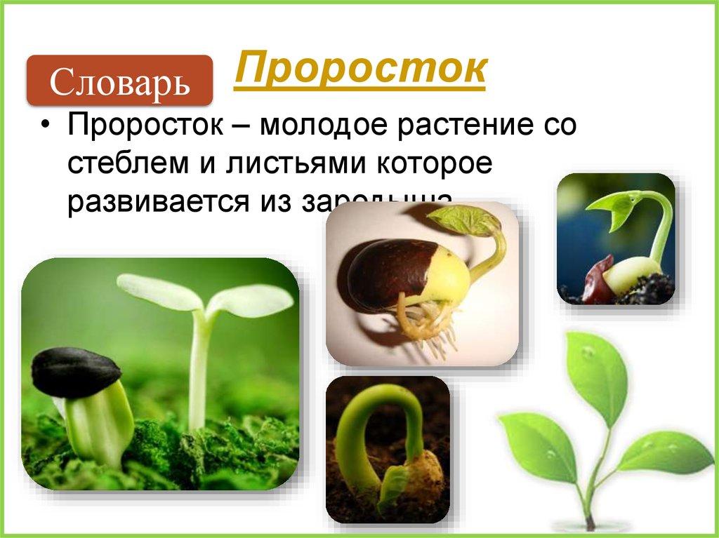 как влияет тепло на прорастание семян