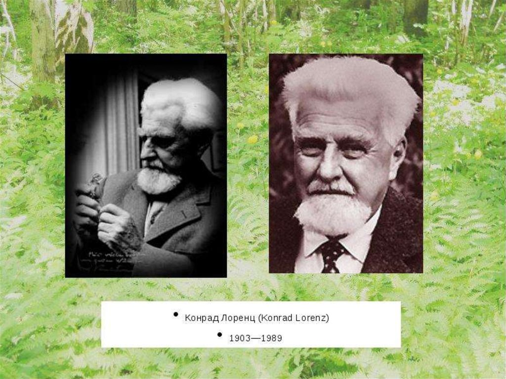 pavlov lorenz and harlow