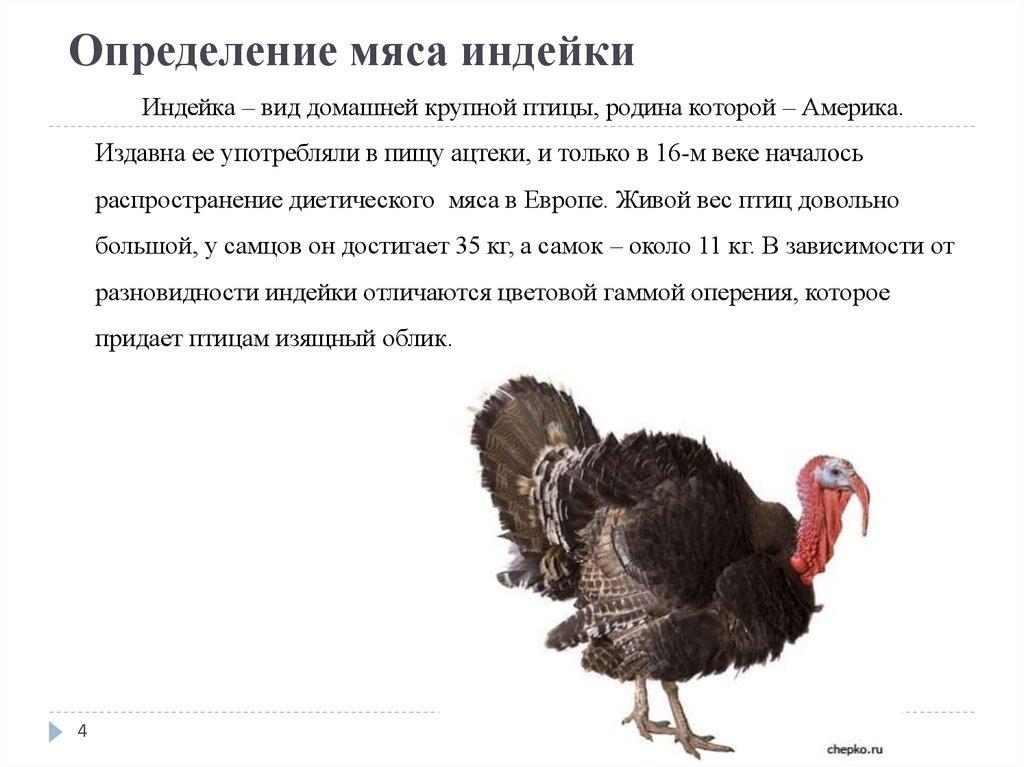 Чем отличается мясо индейки от курицы