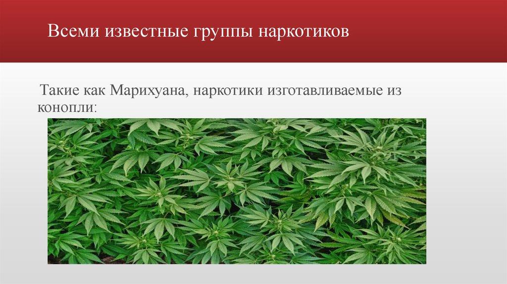 Наркотические средства изготавливаемые из конопли конопля в эстонии