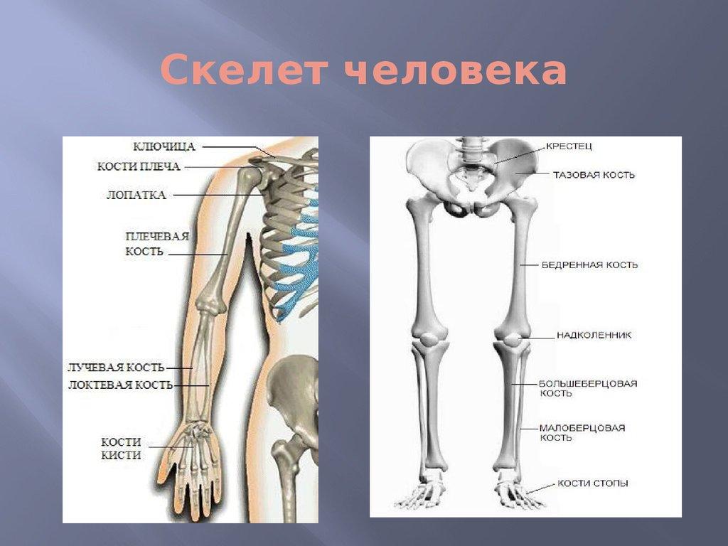 забавные фигурные кости скелета человека фото с описанием поздравления