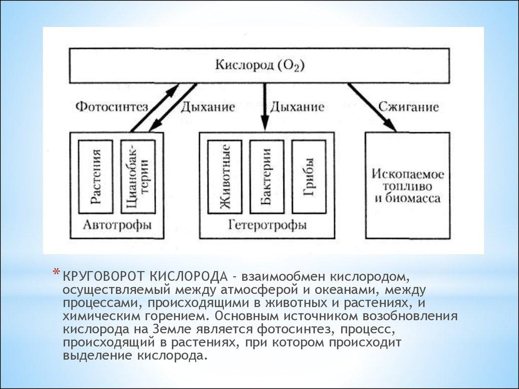 Круговорот кислорода доклад биология 7112