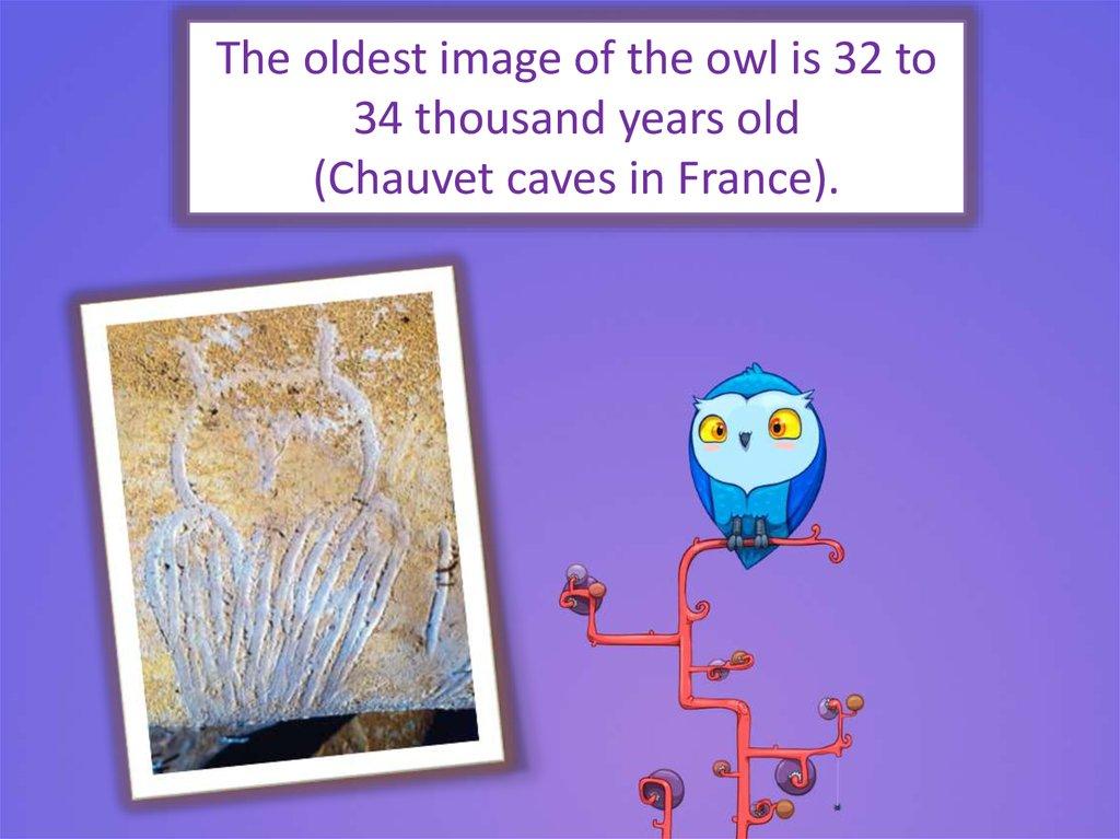 Amazing Owls Owls Are A Birds Of Prey Online Presentation
