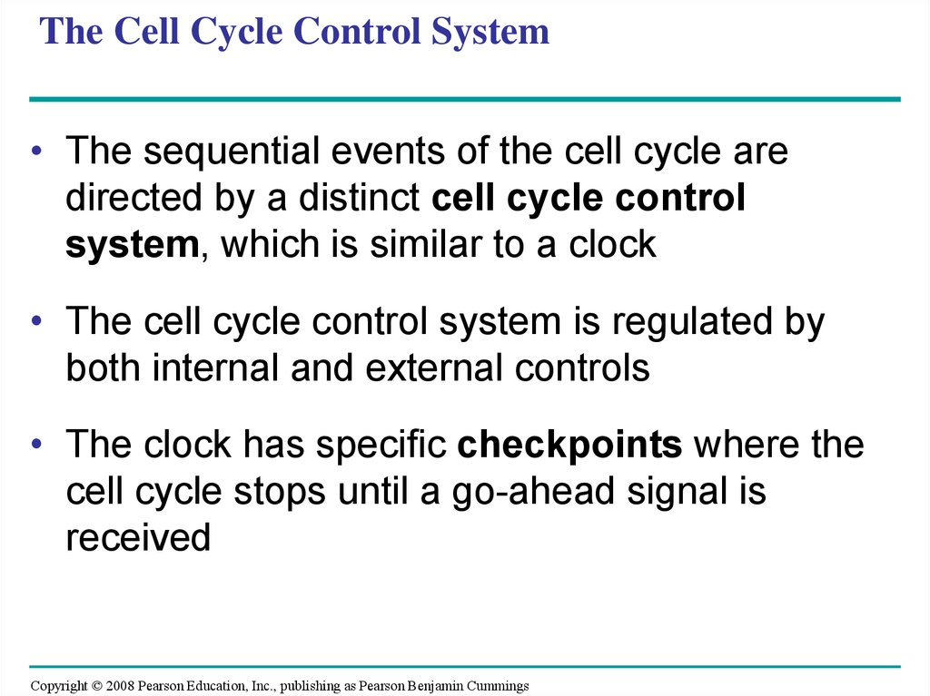 The Cell Cycle Control System