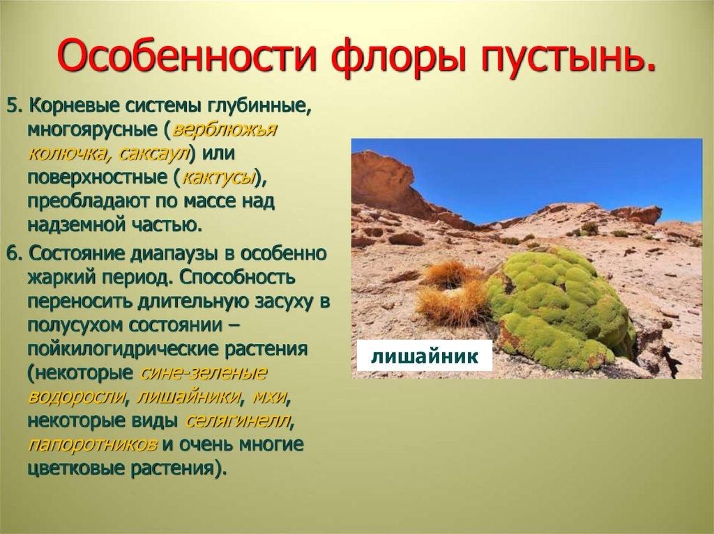 удивительных флора россии кратко сшитый своими руками