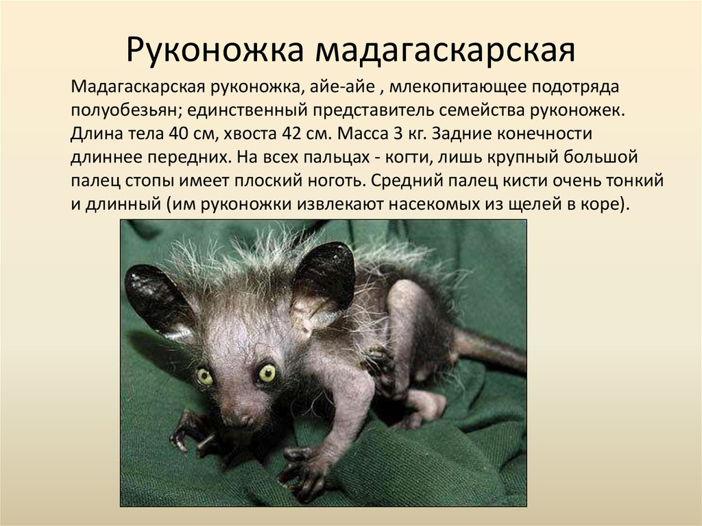вам самые редкие животные фото и описание виды