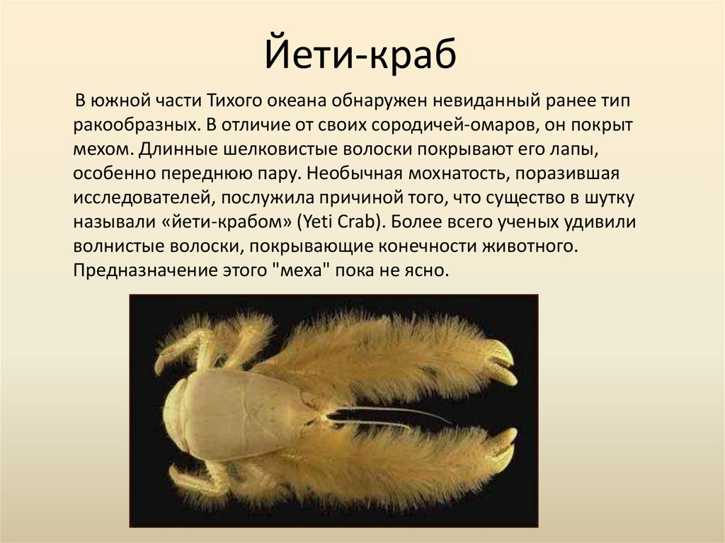 how a blind bristled heatloving yeti crab thrives in - 1024×767