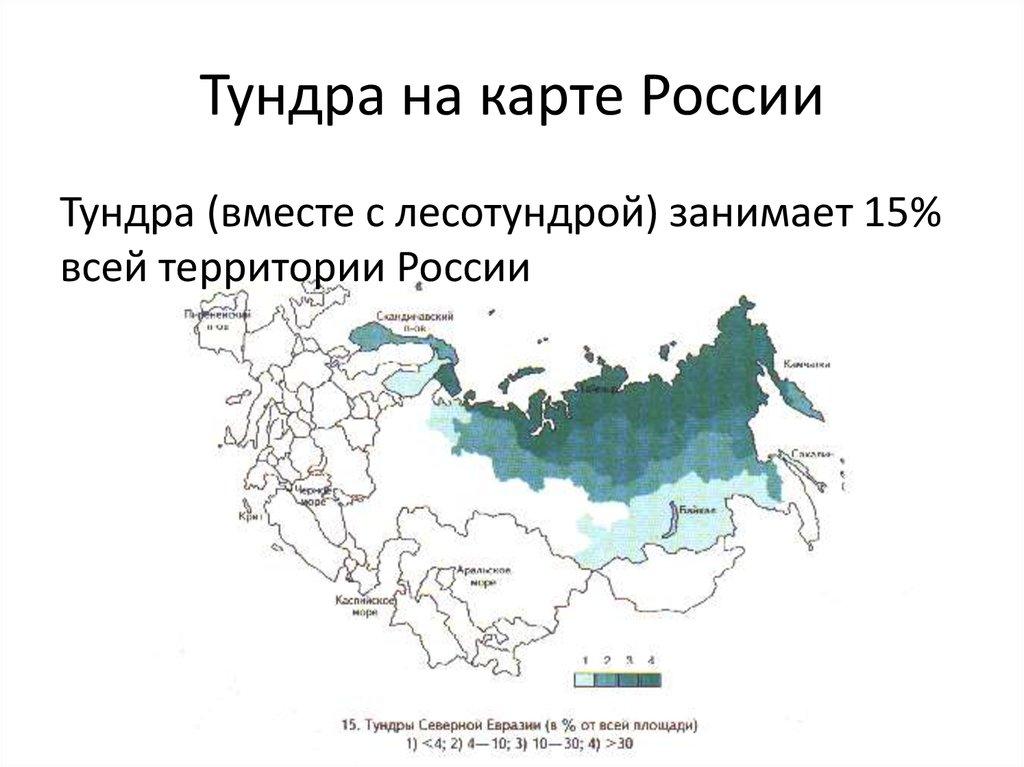 применить где находится тундра на карте россии фото объявления продаже квартир