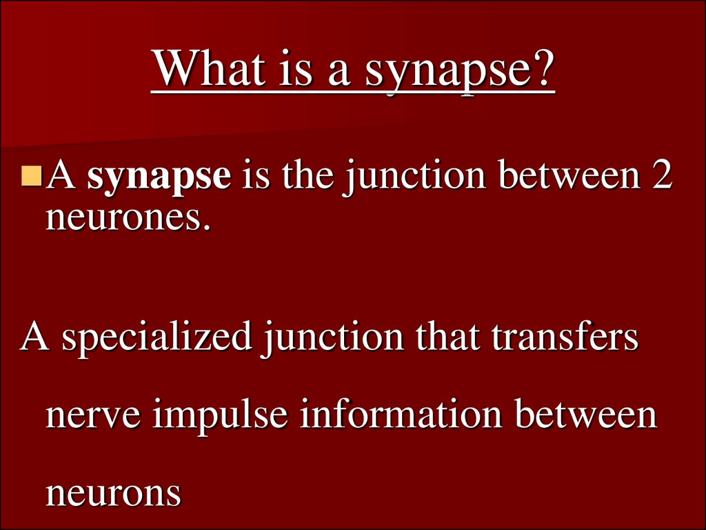 What is a synapse?