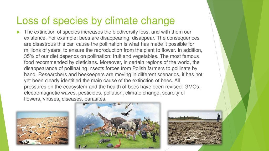 loss of biodiversity Advertisements: biodiversity: loss of biodiversity and its impact (with maps) put simply, biodiversity means the variety and variability of organisms in the world.