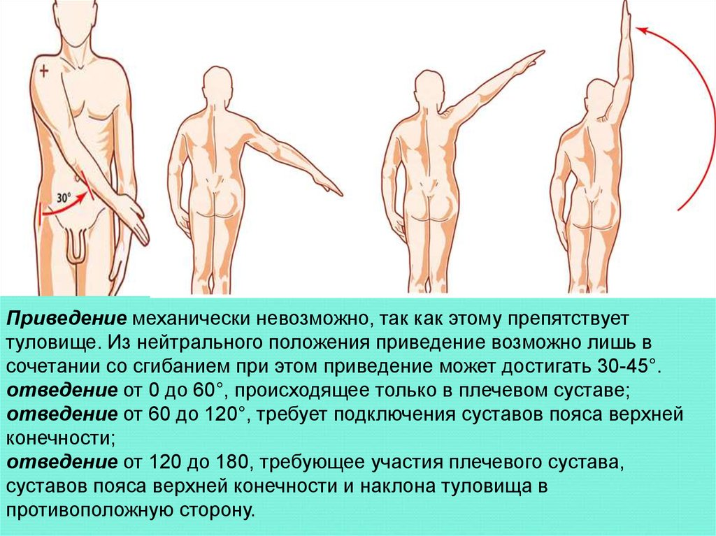 Отведение в плечевом суставе фото денервация нервных окончаний межпозвонковых суставов
