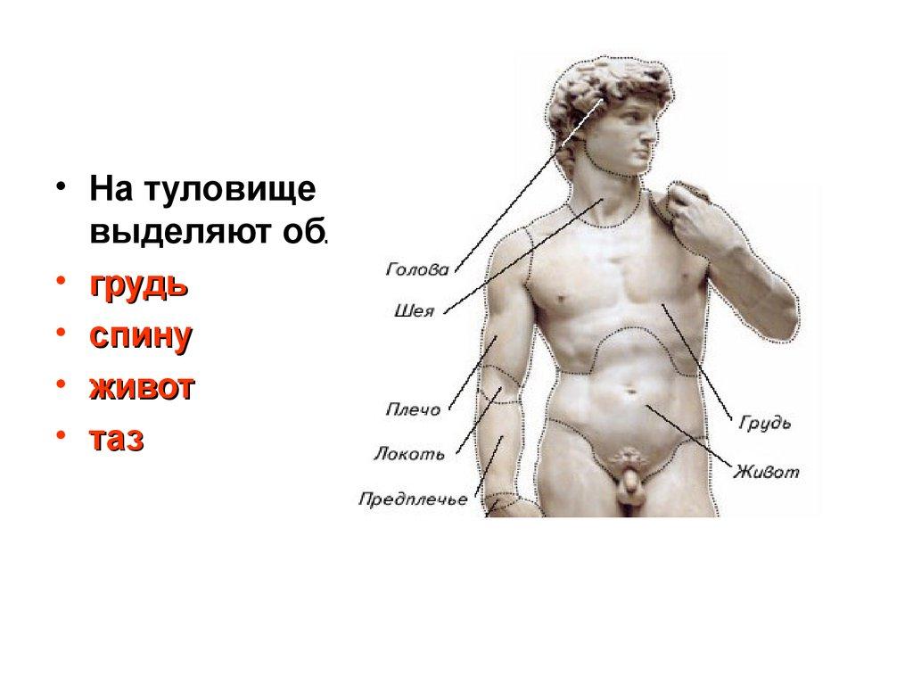 человек как предмет естествознания реферат