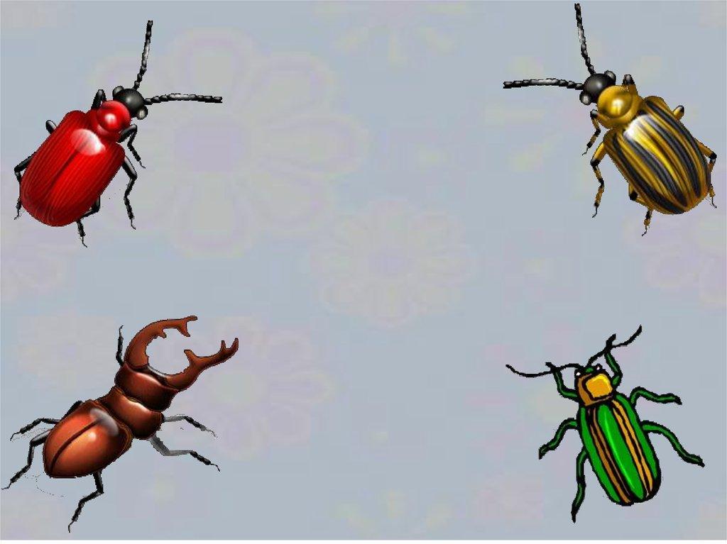 несколько картинка четвертый лишний насекомые пудра поможет