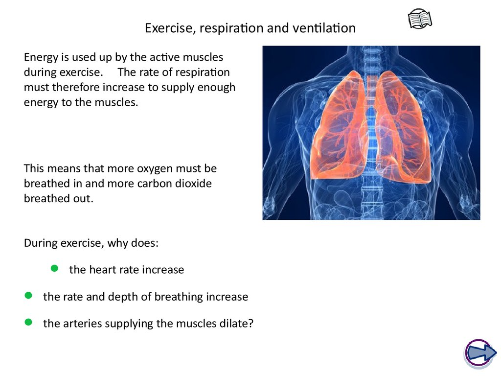 Exercise, respiration and ventilation