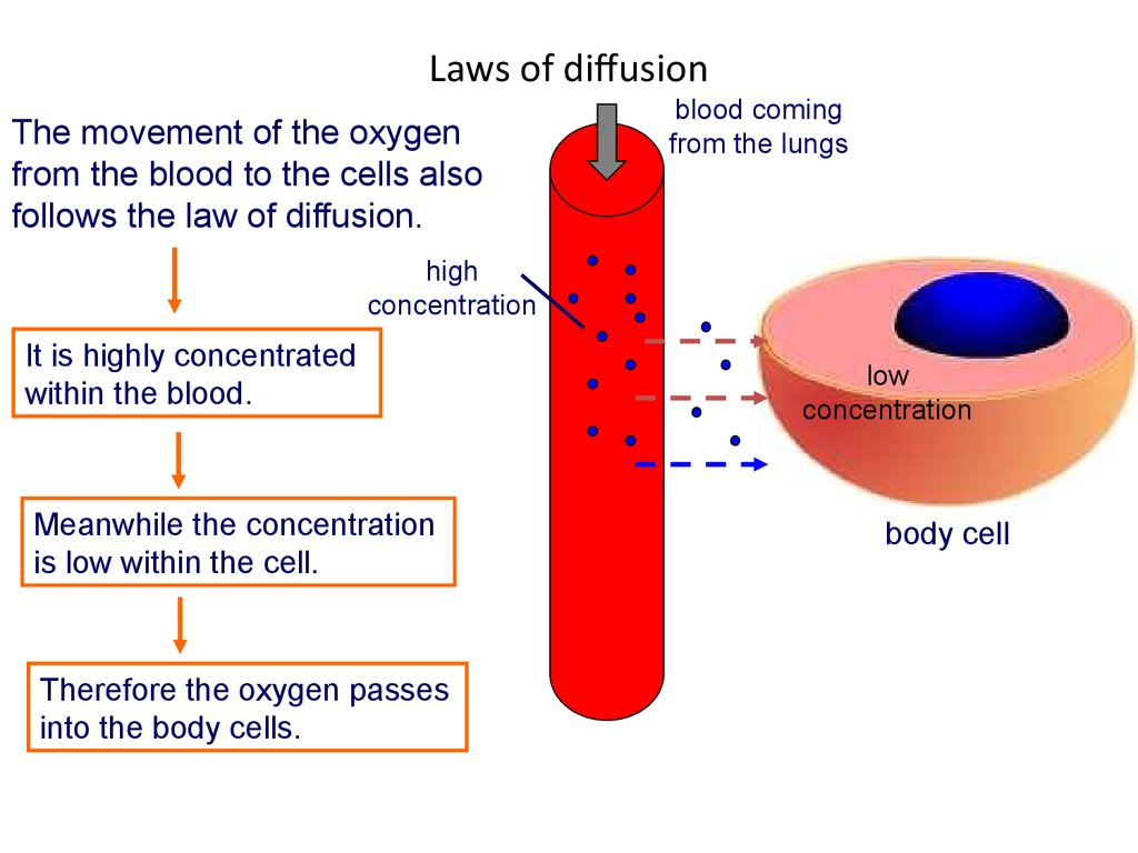 Laws of diffusion